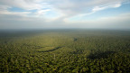 In der Mitte des Amazonas-Waldes im Bundesstaat Amazonas.