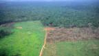 Sicht auf einen Teil des Amazonas-Regenwaldes. Im Vordergrund ist eine gerodete Fläche sichtbar.