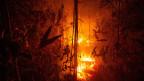 Der Amazonas-Regenwald steht zum Teil in Flammen.