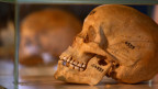 Menschliche Schädel der Herero und ethnischen Nama werden während einer Zeremonie in Berlin, Deutschland.