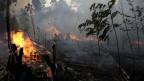 Waldbrand in einem Teil des Amazonas-Regenwaldes.