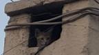 Eine verängstigte Katze hat sich in einem Kamin in Idlib versteckt.
