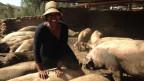 Leeko Makoene ist Bäuerin und möchte mehr Land für ihre Schweinezucht. Aber das Land gehört in Südafrika noch immer den Weissen.