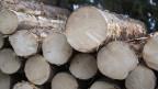 Räte verbieten Handel mit illegal gefälltem Holz