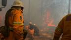 In Australien wüten seit September riesige Buschfeuer.