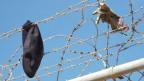 Eine Kappe und Handschuh am Grenzzaun zwischen Spanien und Marokko in der spanischen Enklave Melilla.