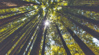 Australischer Wald. Symbolbild.