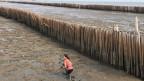 Bambuswälle sollen die Flut zurückhalten.