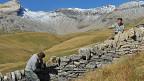 Freiwillige beim Bau einer Trockenmauer auf der Alp Curtginatsch oberhalb von Wergenstein GR.