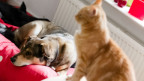 Unsere liebsten Mitbewohner - zum Welt-Tiertag