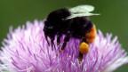 Mit Insekten gegen Schädlinge und Krankheiten.
