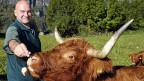 Guido Leutenegger neben einem seiner Hochlandrinder.