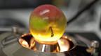 Qualitätsmessung eines Apfels mit Infrarot-Licht in der Forschungsanstalt Agroscope in Wädenswil.