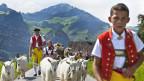 200 Millionen für den Schweizer Tourismus. Bild: Alpabzug vom Schwizerälpli oberhalb Schwende im Kanton Appenzell Innerrhoden nach Appenzell.