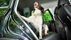 Junior, der Geld-Schnüffelhund der Stadtpolizei Winterthur.
