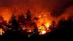 Das Feuer wütete fast während einer Woche. Die Natur hat sich erstaunlich gut erholt.