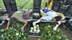 Für Bauernverbandspräsident Markus Rittter sind die 20'000 ausländischen Arbeitskräfte in der Schweizer Landwirtschaft ausschlaggebend für das Nein zur SVP- Masseneinwanderungs-Initiative.
