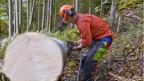 Holznutzung im Schweizer Wald.