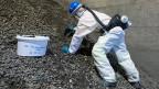 Über 600'000 Tonnen Sondermüll wurde von Chemiefirmen von überallher zwischen 1978 und 1985 in Kölliken in den Boden gekippt. Die nun stattfindende Sanierung dürfte gegen eine Milliarde Franken kosten.