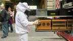 Immer mehr Menschen wollen Bienen halten – an zum Teil unmöglichen Orten. Bild: Ein wieder eingefangenes Bienenvolk in der Stadt Bern.
