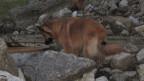 Die Hunde lernen auf den Trümmern zu laufen, etwas, was nicht einfach ist.