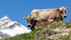 Man geht davon aus, dass bis zu 80 Prozent der Ostschweizer Bauern ihr Vieh dieses Jahr nicht mehr ennet der Grenze in die Sommerfrische schickten.