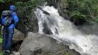 Im sogenannten «Prall- und Sprühbereich» eines Wasserfallsa ist es glitschig - und eher ungemütlich – aber es wimmelt von Leben.