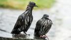 Im vergangenen Sommer sind nicht nur Tauben öfters nass geworden.