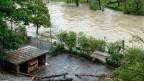 Die  Aare tritt beim Tierpark «Dählhölzli» nach erneuten heftigen Regenfällen über die Ufer. 4. Mai 2015.