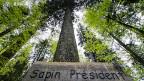Die «Sapin Président» im Wald von Baulmes. Ein Schatz seien diese Giganten, ein Schatz den es zu bewahren gelte – sagt der Kreisförster.
