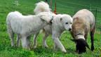 Diesen Tieren scheint es gut zu gehen. 90 Prozent der Meldungen, die der Tierschutz erhält, bezeichnet er als berechtigte Meldungen.