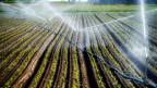 Wegen der anhaltenden Trockenheit müssen Felder bewässert werden.