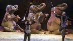Der Circus Knie ohne Elefanten - wie Kino ohne Popcorn?