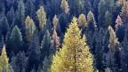 Dass die Artenvielfalt des Schweizer Waldes zugenommen hat, schreiben die Fachleute unter anderem der vermehrt naturnahen Waldbewirtschaftung zu.
