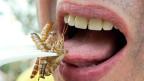 Eine Alternative zu Fleisch? Mit Insekten mehr essbares Eiweiss produzieren mit weniger Schaden für die Umwelt.