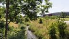 Fischer und die Umweltorganisationen wie Pro Natura sind empört, dass ausgerechnet die Bauern die Umsetzung des Volksentscheides zum Gewässerschutz von 2011 zu verhindern versuchen. Bild: Eulachbach bei Winterthur.