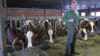 Dank der Viehzucht, seinem zweiten Standbein, schreibt Walter Lüthis Betrieb noch einen kleinen Gewinn.