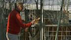 Die Solothurner Kantonsverwaltung kennt Zwangsräumungen zwar bei Wohnungen. Aber ein Tierpark mit Raubkatzen - dass ist für sie etwas ganz Neues. Bild: René Strickler bei den Tigern im Raubtierpark in Subingen.