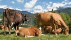 Es wäre ethisch fragwürdig, Ackerfläche zu brauchen, um im grossen Stil Tierfutter anzupflanzen, sagt der Agronom Eric Meili. Er fände es deshalb vernünftiger, auf Wiederkäuer zu setzen; in erster Linie auf Rinder.