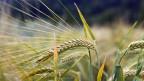 Sieben Stunden lang haben die Bauernvertreter den Nationalrat beackert - mit Erfolg: Mit 91 gegen 83 Stimmen empfiehlt der Nationalrat ein Ja zur Initiative «für Ernährungssicherheit».