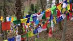 In Rikon im Zürcher Oberland leben etwa 500 Tibeter. Sie kamen als Flüchtlinge in den 60er Jahren. Bild: Tibetische Gebetsfahnen in Rikon.