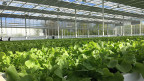 Im Hydrogewächshaus der Sallatgarten AG sollen pro Jahr rund zwei Millionen Salate produziert werden, für die Betreuung reichen acht Angestellte.