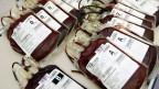 Beutel mit frisch gespendetem Blut beim Blutspendedienst des Schweizerischen Roten Kreuzes SRK in Zürich.