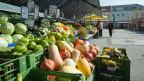 Die Banane, die Wassermelone, die Aubergine, der Brocoli - diese Früchte und Gemüse - sind Resultat jahrhundertelanger Züchtungen. Wer pflanzen natürlich züchtet, verändert das Erbgut und wählt aus.