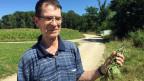 Manfred Klopocki kämpft seit Jahren gegen die Neophyten. Eine Sysiphusarbeit.