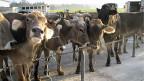 Der Viehmarkt erlaubt gute Kontrollen – ein Grund dafür, dass entschieden wurde ihn weiterzuführen, nachdem der alte Standort Sursee gekündigt wurde. Neu werden also nun in Eschenbach jedes Jahr fast 8000 Tiere den Besitzer wechseln.