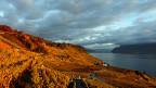 Blick über das Weinbaugebiet Lavaux über dem Genfersee