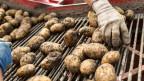 Mit der Initiative verlangen die Bauern, dass der Bund die Versorgung der Bevölkerung mit Lebensmitteln «aus vielfältiger und nachhaltiger einheimischer Produktion stärkt».