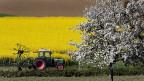 Bauernland im Kanton Thurgau: Ein Rapsfeld, eine Wiese, ein blühender Baum. Das soll erhalten werden