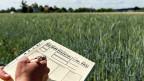 Die angebliche Skepsis der Bevölkerung gegen Gentech-Lebensmittel sei herbeigeredet, sagen die einen. Schweizerinnen und Schweizer wollten Naturnähe, meinen andere. Bild: Gentech-Testfeld von Agroscope in Reckenholz.
